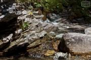 Kleiner Wasserlauf im Großarltal