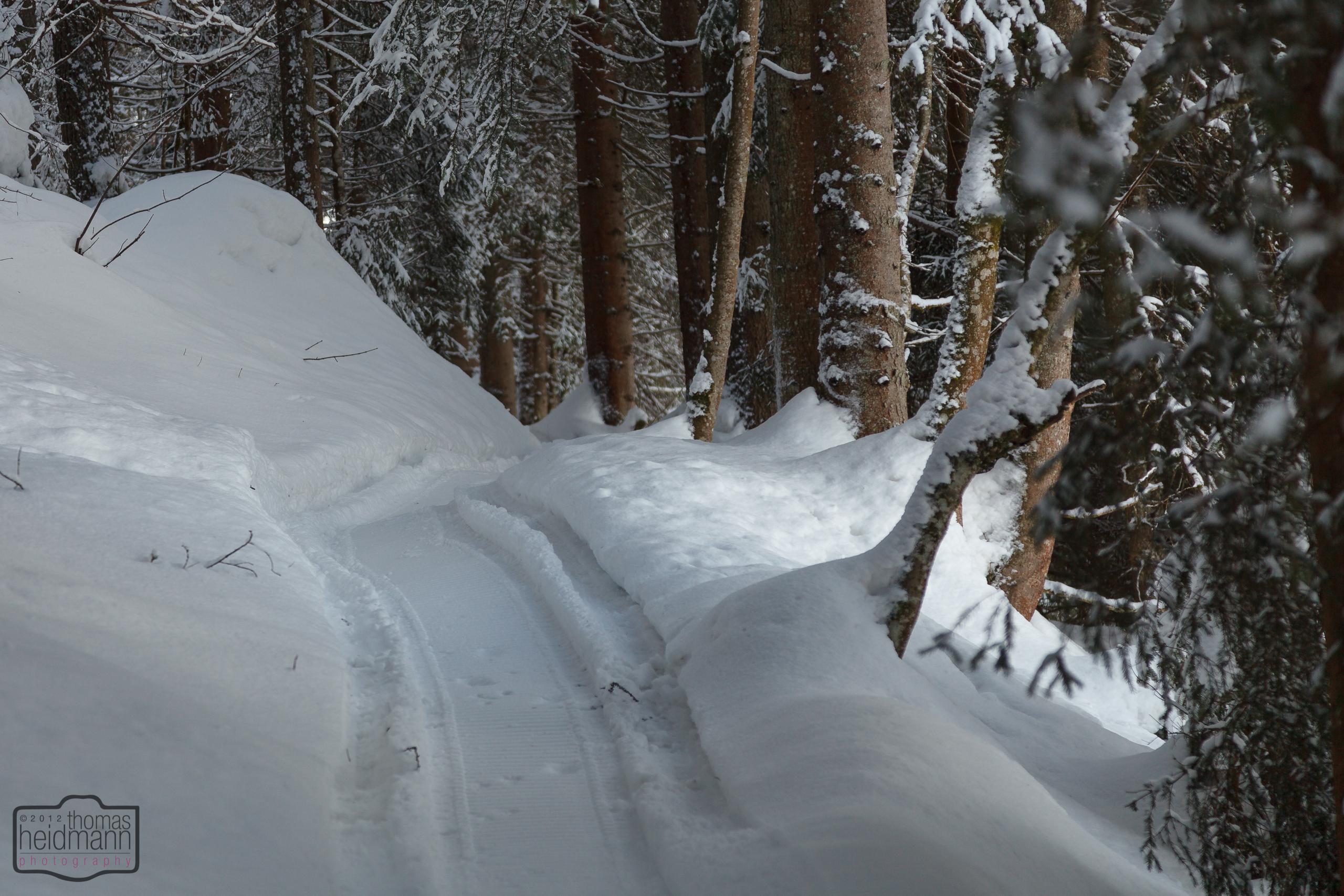 Schmaler Wanderweg durch den Wald