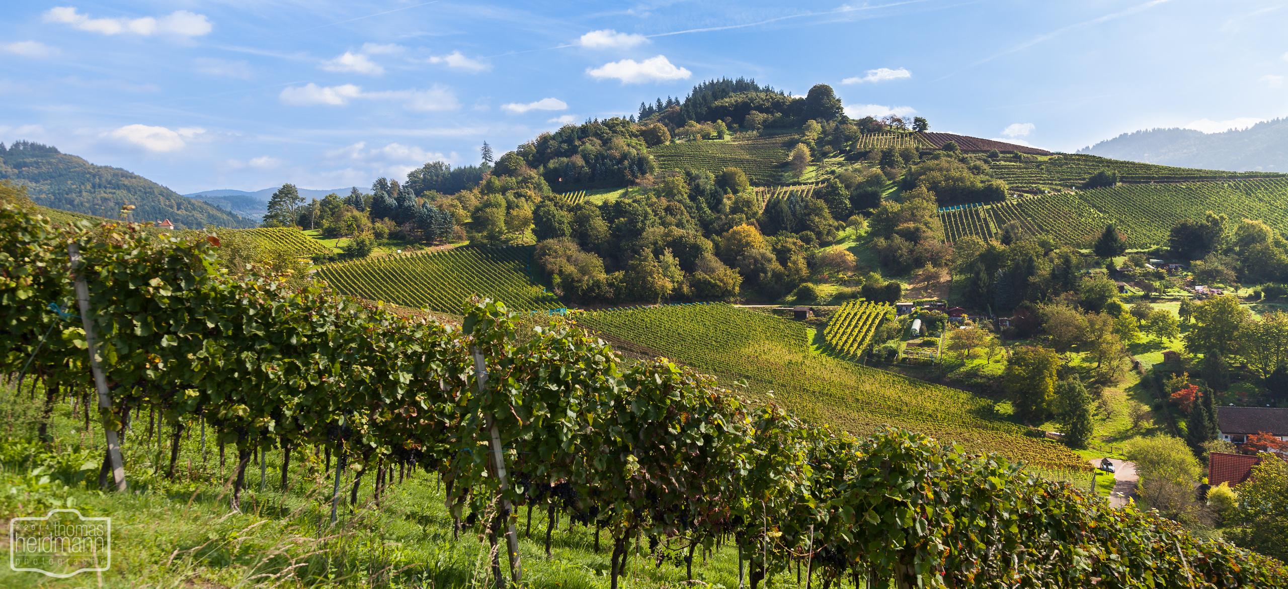 Wanderung durch die Gengenbacher Weinberge