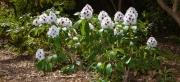 Ein Spaziergang durch den Hobbie Rhododendronpark bei Westerstede