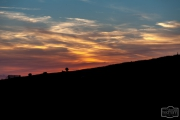 Schafe bei Sonnenuntergang auf Nordstrand
