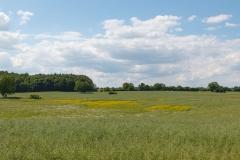 Gegend bei Maasholm