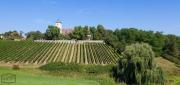 Weinberge in Franken bei Volkach
