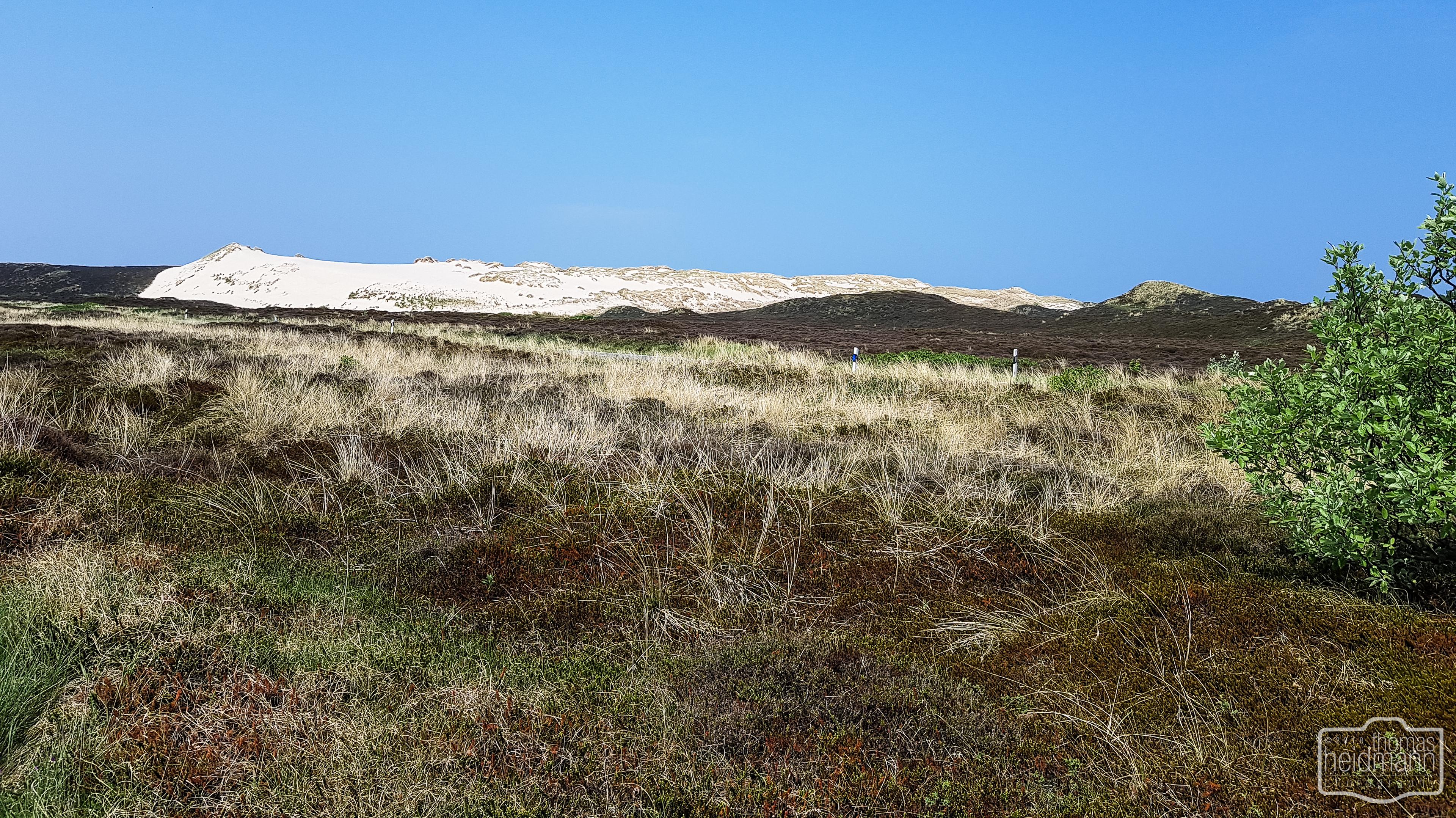 Wanderdünen von Sylt