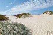 Dünen bei Hvide Sande in Dänemark