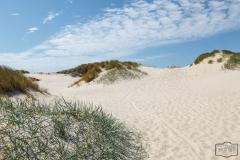 Dünen bei Hvide Sande