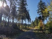 Wanderweg durch den Oberharz bei Altenau