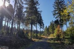 Wanderweg durch den Oberharz