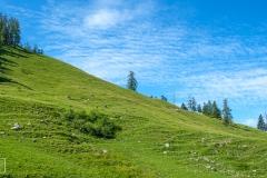 Wanderung zum Jenner-Gipfel - Almblick