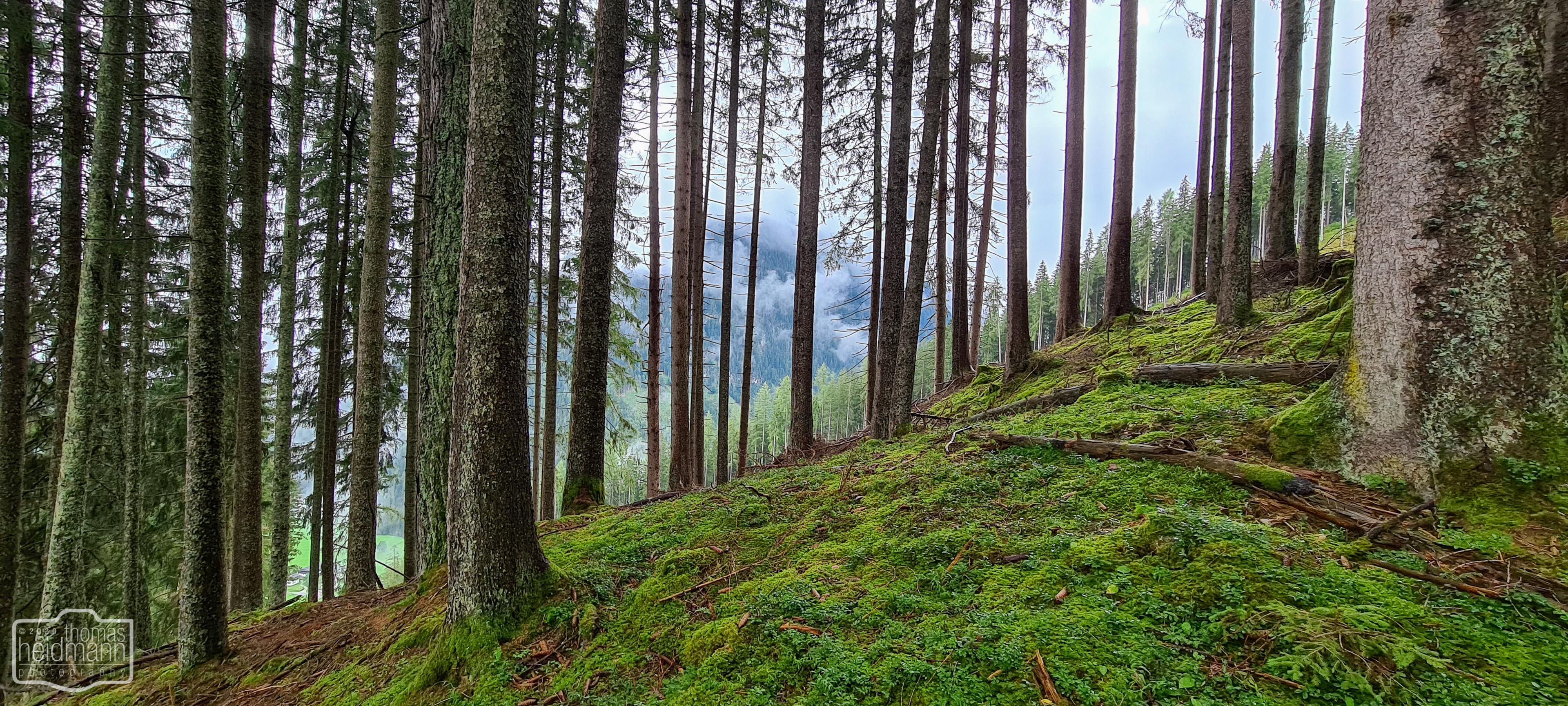 Waldwanderung