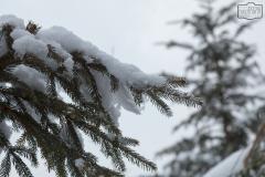Winterdetails