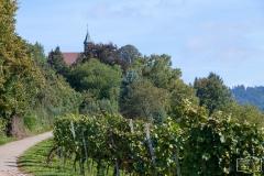 Wanderweg durch Gengenbacher Weinberge