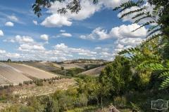 Gegend bei San Gimignano (Toskana)