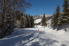 Winterwandern und Ski-Langlauf in Balderschwang