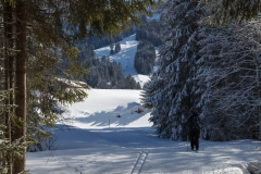 Ski-Langlauf in Balderschwang