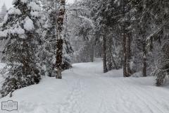 Winterwanderwege in Balderschwang im Allgäu