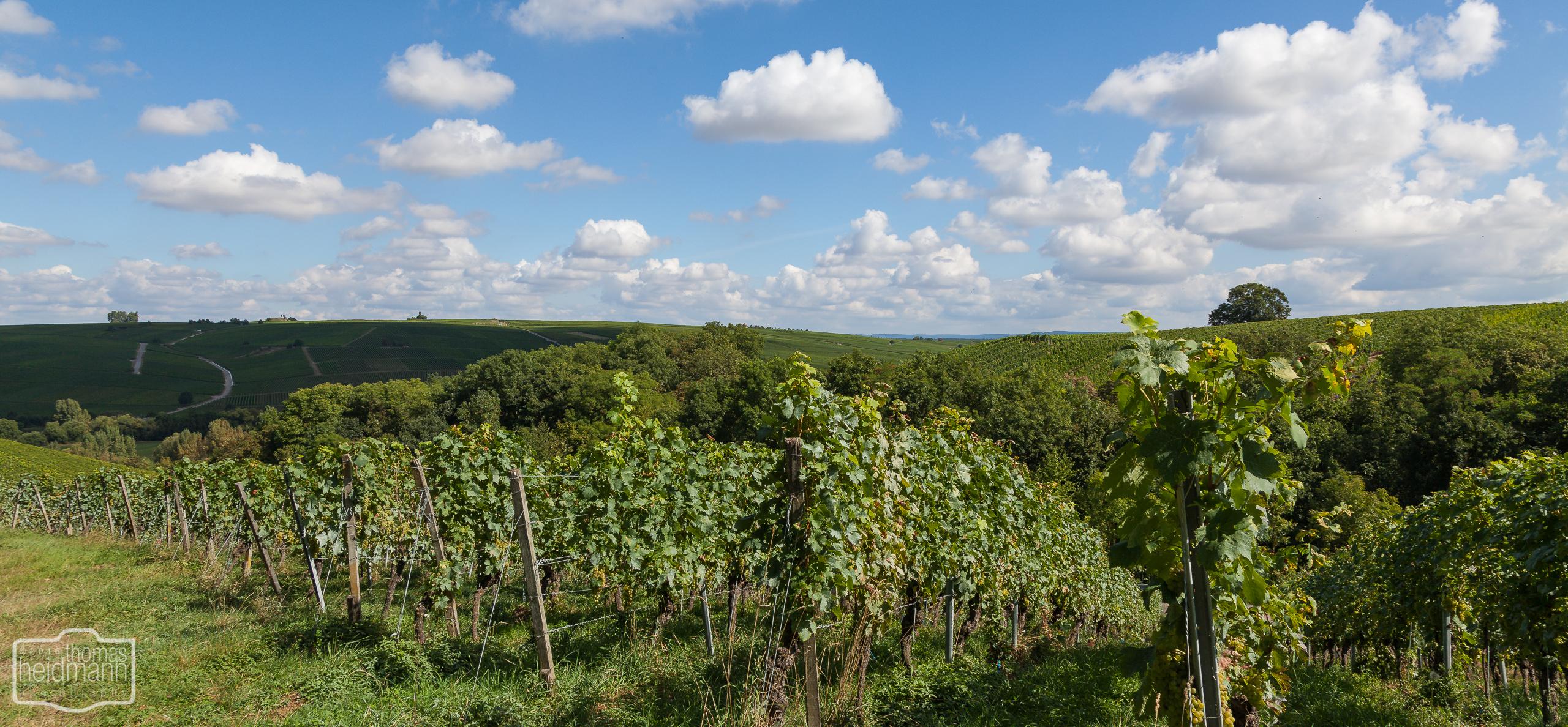Weinberge in Franken bei Volkach am Main