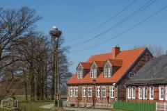 Storchenpaar in Muggendorf an der Elbe bei Wittenberge