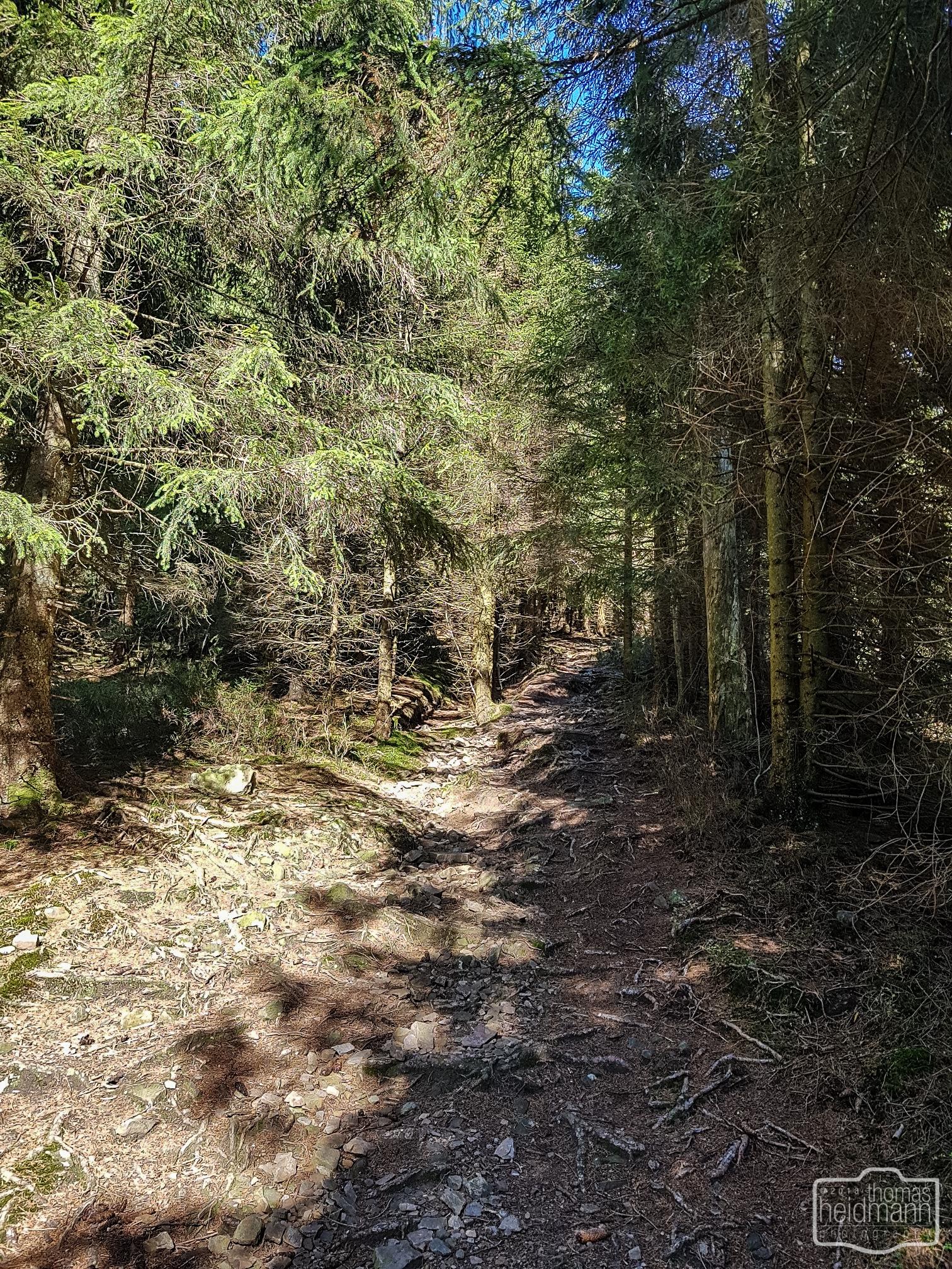 Steiler Baumwurzelweg