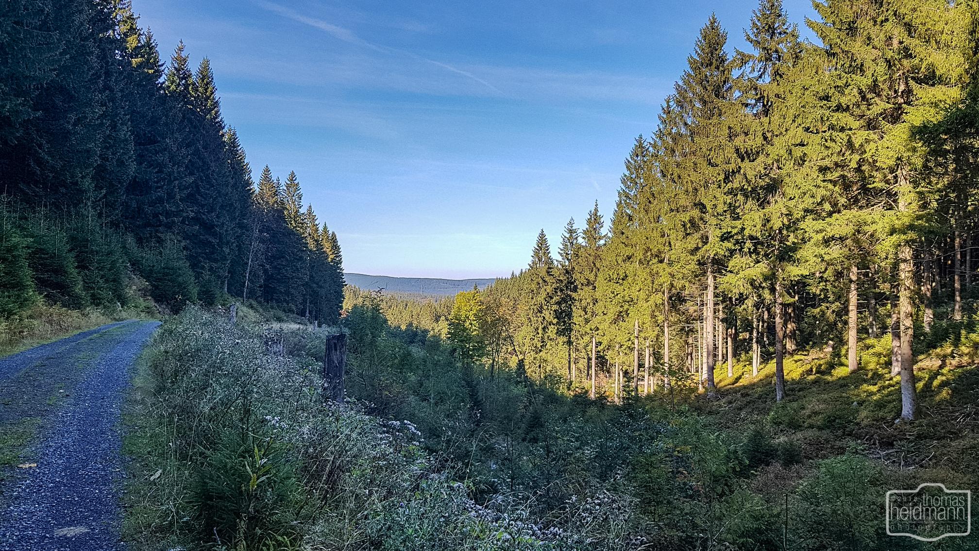 Die Wanderwege um Altenau sind sehr schön