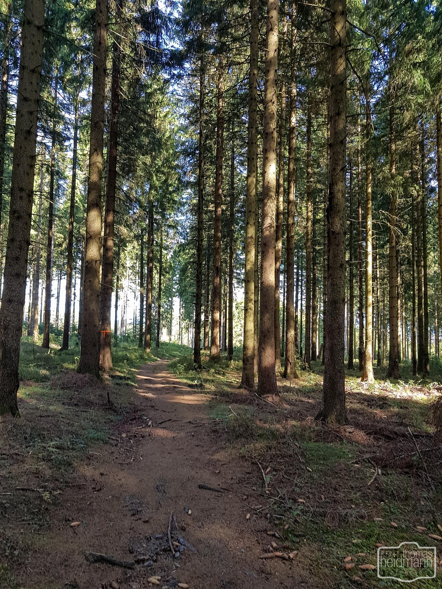Wanderweg bei Altenau