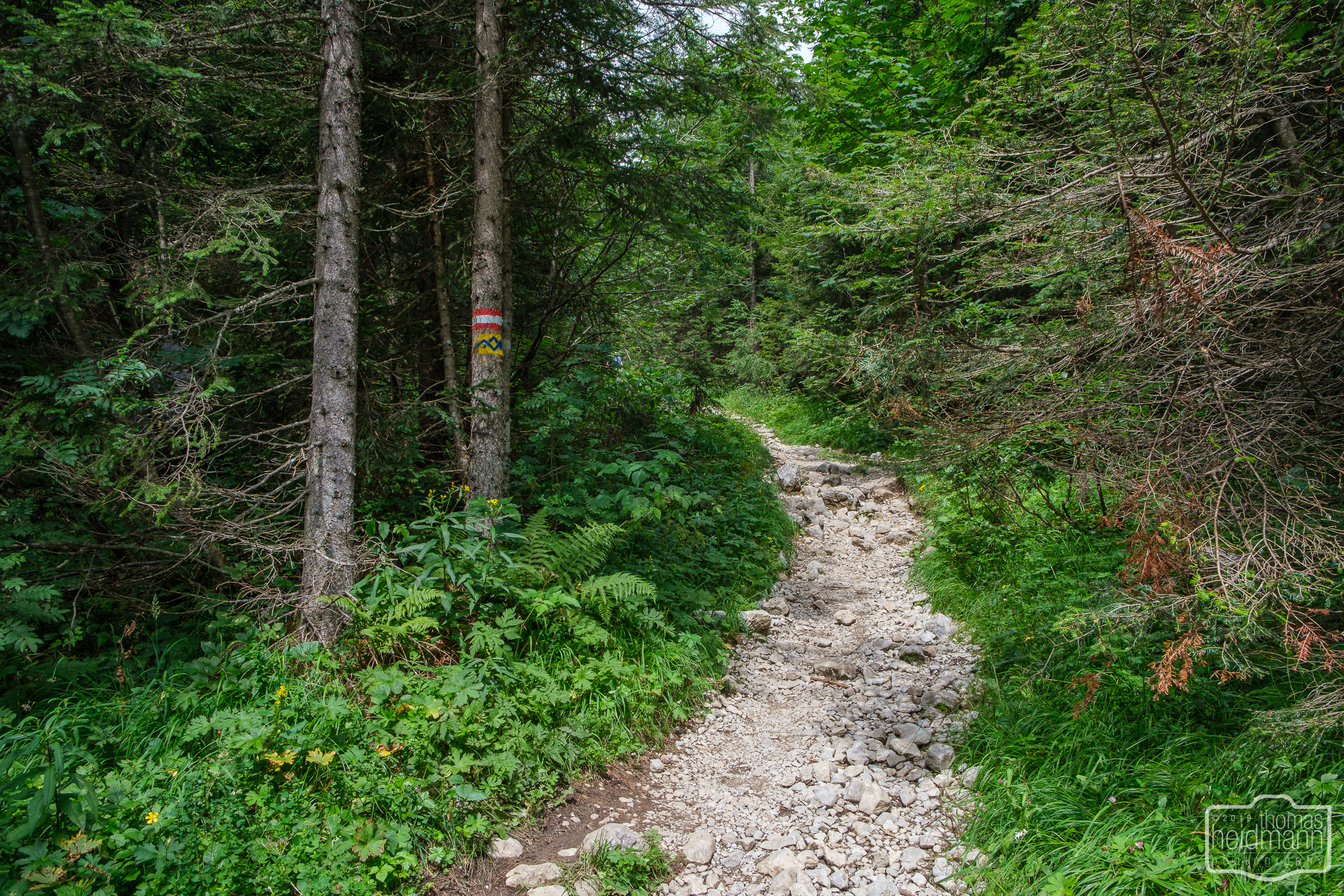 Wanderung zum Grünstein und zur Kuhrointalm - recht steiler Anstieg