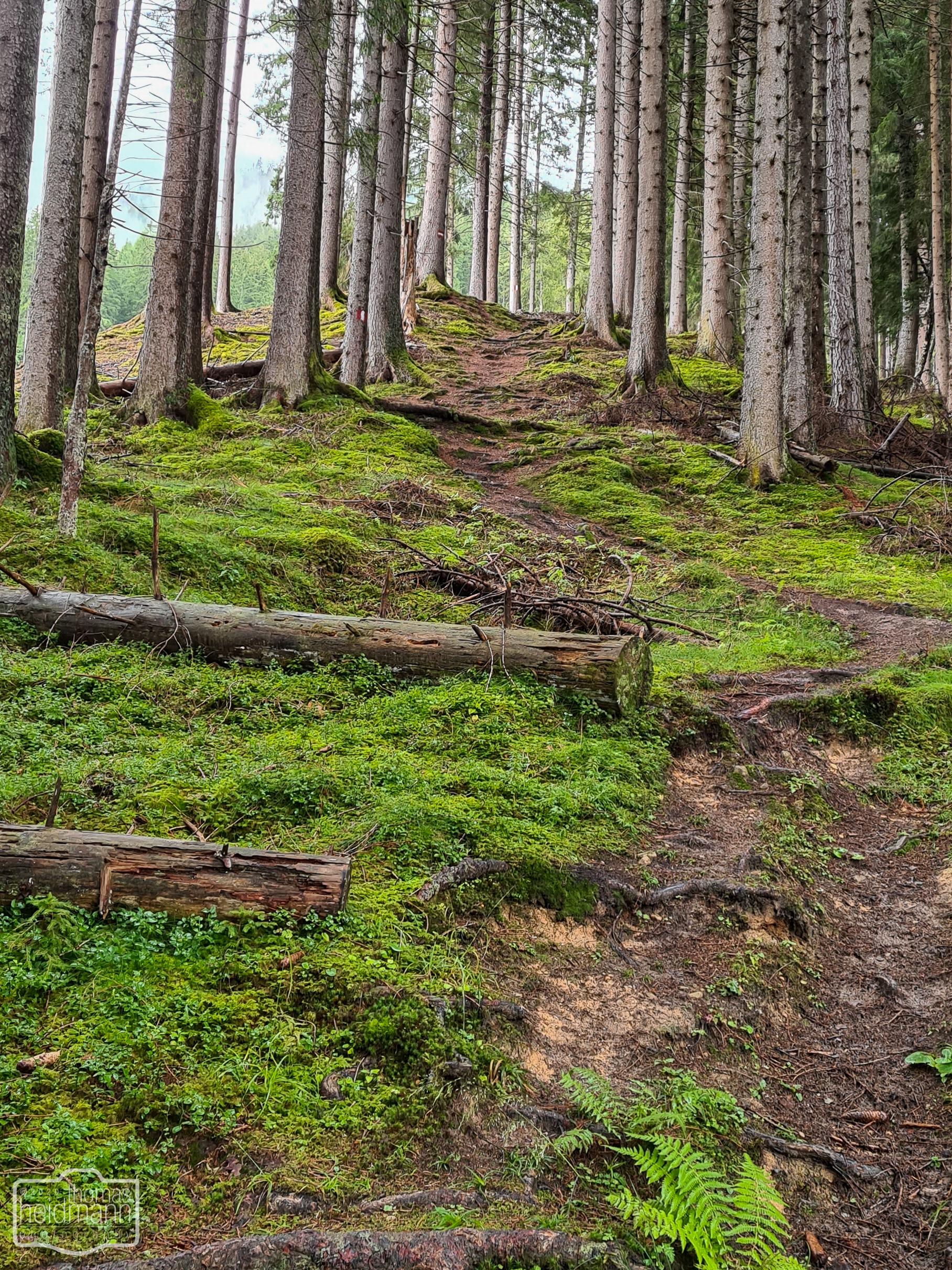 Wurzelweg im Wald