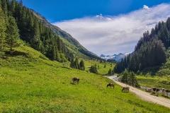 Blick auf den Großvenediger im Obersulzbachtal