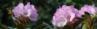 Kurztripp: Hobbie Rhododendronpark in Westerstede